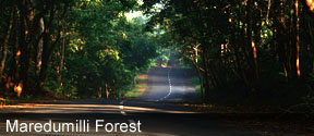 Maredumilli Forest Tour Package
