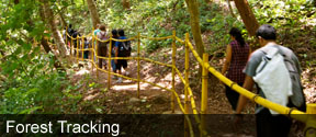 Maredumilli Forest Tracking